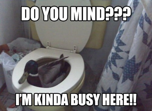 duck bath toilet funny - 7742621696