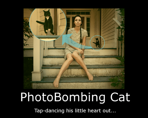 cat photobomb wtf funny - 7742623232