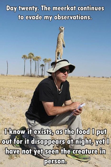 meerkat observations funny - 7742623488