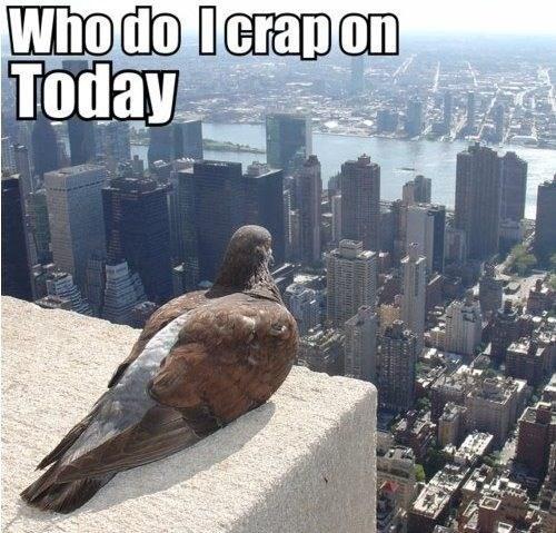 brains humans science pigeons - 7742695168