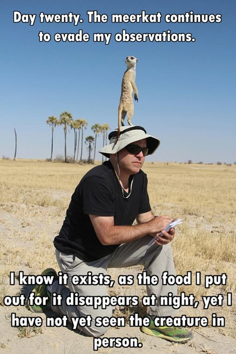 meerkat animals - 7742794752
