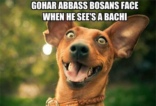 GOHAR ABBASS BOSANS FACE WHEN HE SEE'S A BACHI