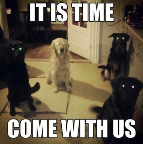 dogs creepy glowing eyes Cats funny - 7742854656