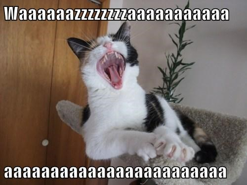Waaaaaazzzzzzzzaaaaaaaaaaa  aaaaaaaaaaaaaaaaaaaaaaaa