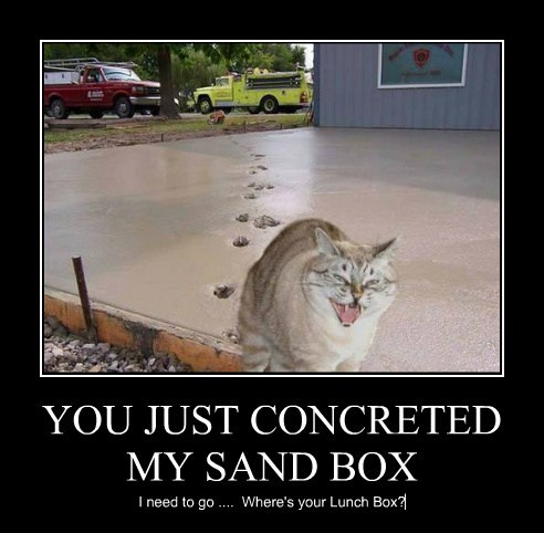 YOU JUST CONCRETED MY SAND BOX I need to go .... Where's your Lunch Box?