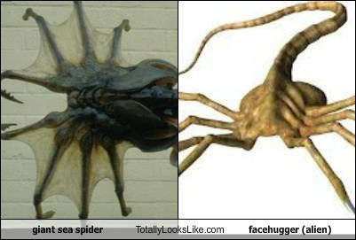spiders,Aliens,facehuggers,nope,totally looks like,funny