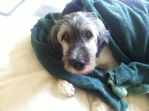 dogs nixon rip sofa - 7743854336