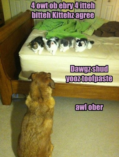 dogs toothpaste Cats funny stinky - 7744827136