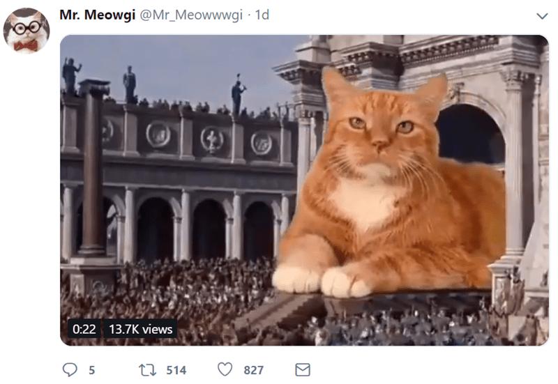 funny cats cat tweets funny tweets Cats - 7745541
