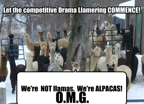 Let the competitive Drama Llamering COMMENCE! We're NOT llamas. We're ALPACAS! O.M.G.
