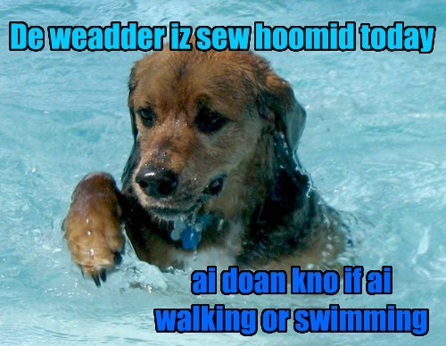 humid summer swimming - 7746382592