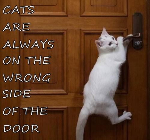 CATS ARE ALWAYS ON THE WRONG SIDE