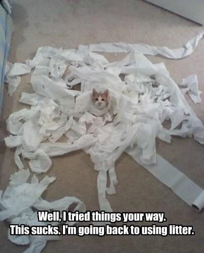 toilet paper litter box funny - 7746513920