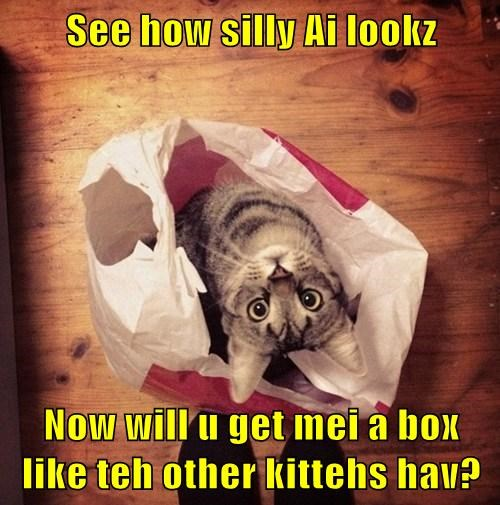 See how silly Ai lookz Now will u get mei a box like teh other kittehs hav?