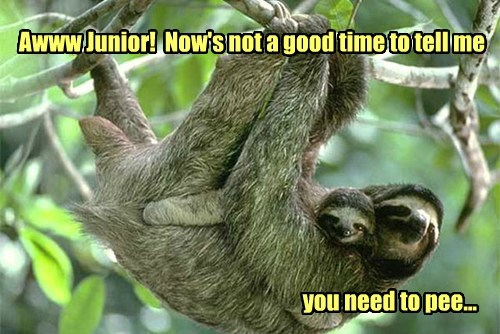 kids,pee,sloths,funny,comfortable