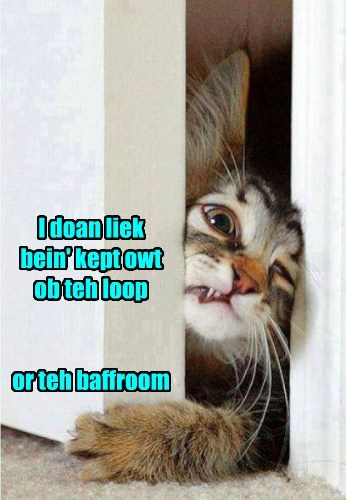 kitten bathroom funny out of the loop - 7746611200