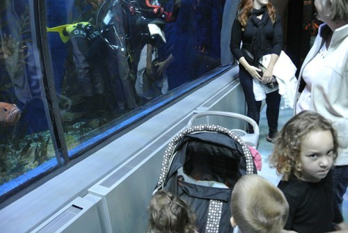 photobomb,kids,aquarium,funny