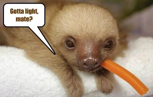 carrot sloth - 7746736896