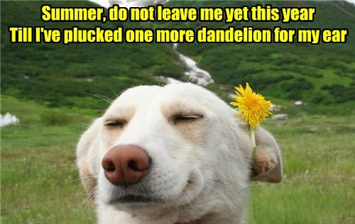 dandelion summer cute - 7747989248