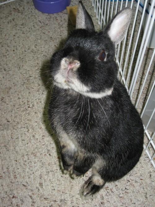 pets,cheerios,bunny