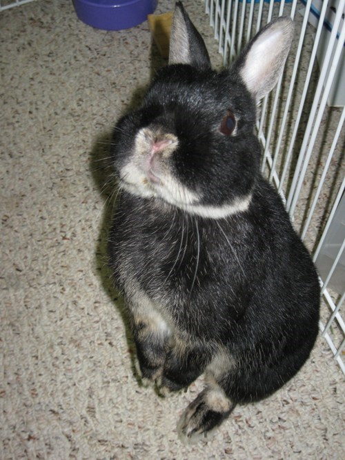 pets cheerios bunny - 7747992320