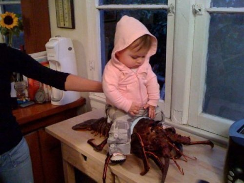 Babies parenting lobsters funny g rated - 7748906752