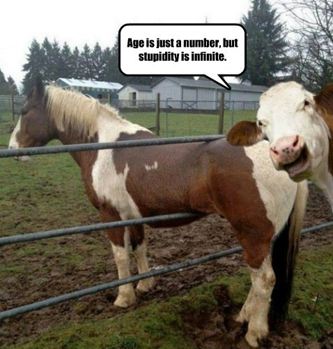 horses math funny cows stupidity - 7748912896