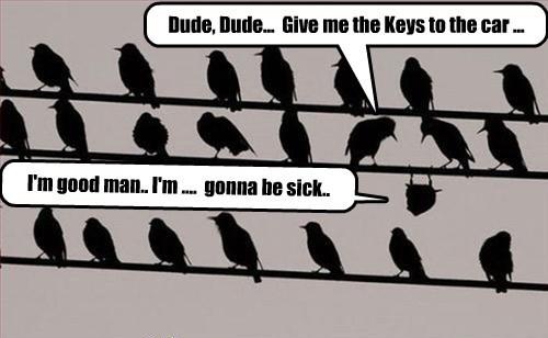 birds drunk - 7749119232