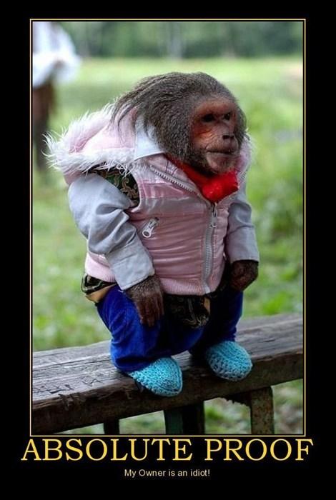bananas monkey clothes funny - 7749533952