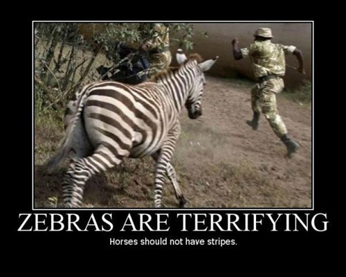zebra scary run funny animals - 7749537024