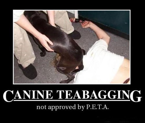 dogs wtf teabagging funny - 7749546752