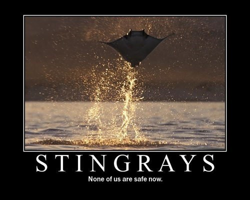 stingray wtf funny animals flying - 7749550592