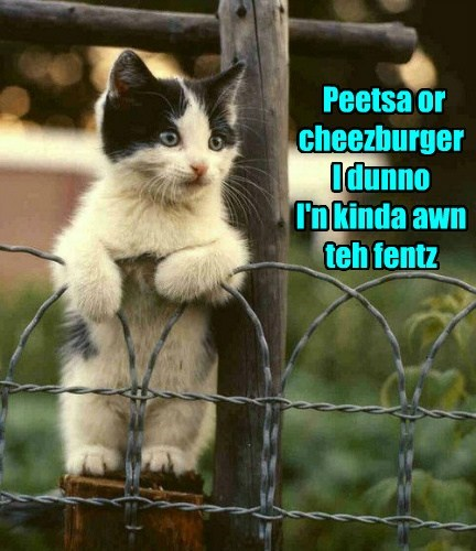 pizza,kitten,cheeseburger,on the fence,funny
