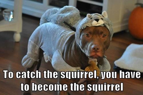 costume squirrel nuts funny - 7750249472