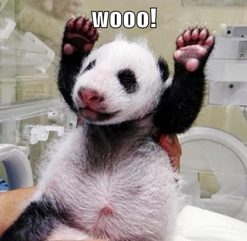 panda born wooo funny - 7751489792
