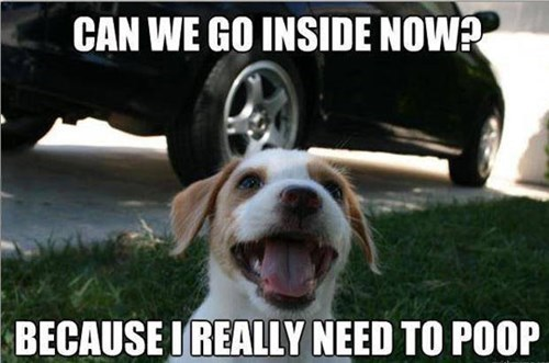 inside,poop,puppy logic,funny