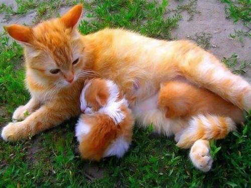 kitten - 7752248832