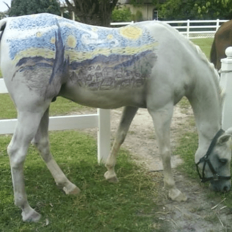starry night pets graffiti funny horse - 7752476928
