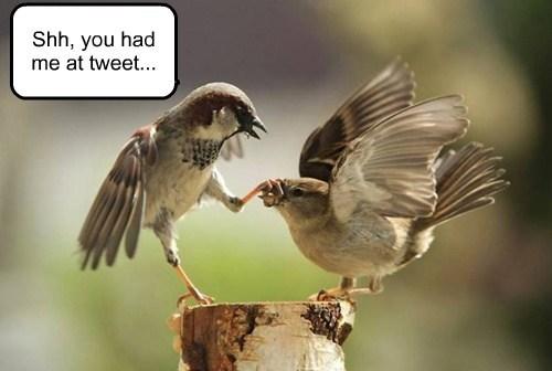 twitter,birds