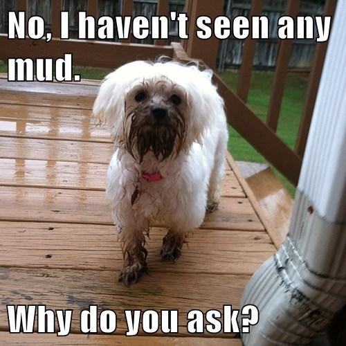 No, I haven't seen any mud.  Why do you ask?