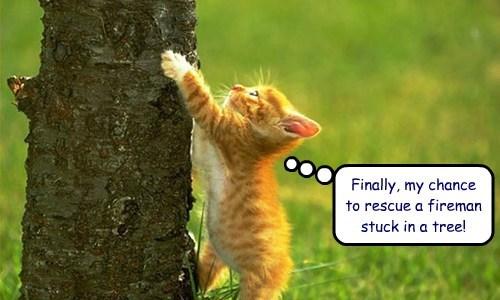 fireman kitten rescue - 7752835584