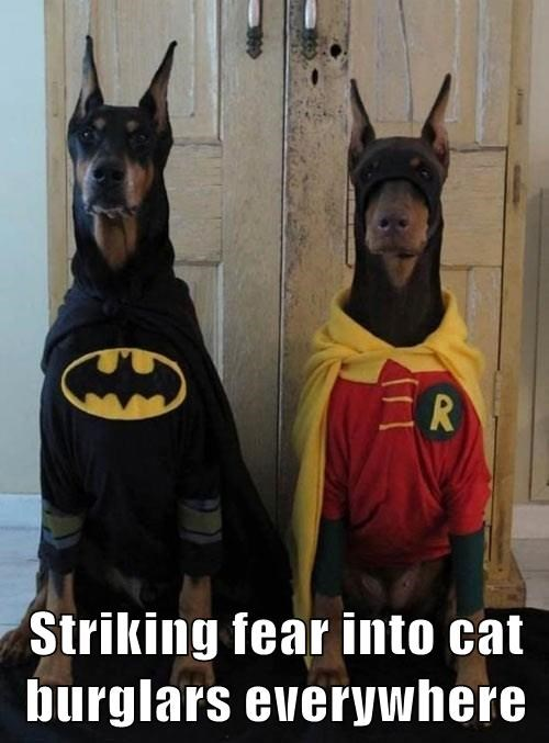 Cat Burglar Batman and Robin costume funny