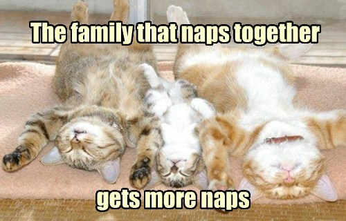 simplicity,naps,family,funny