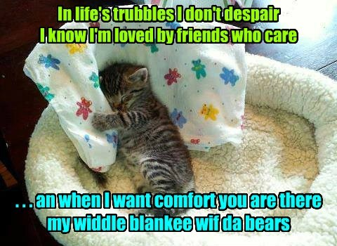 security blanket troubles kitten cute - 7753361664