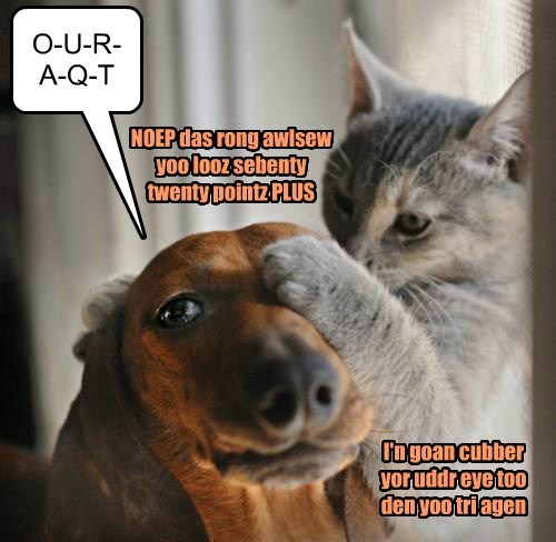 dogs eye doctor Cats funny - 7753423360