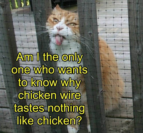 Am I the only  one who wants  to know why chicken wire tastes nothing like chicken?