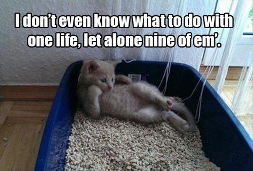 existential crisis,kitten,lives,funny