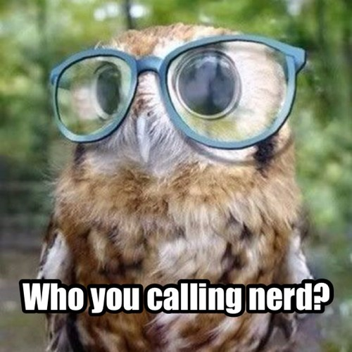 glasses,Owl,nerd