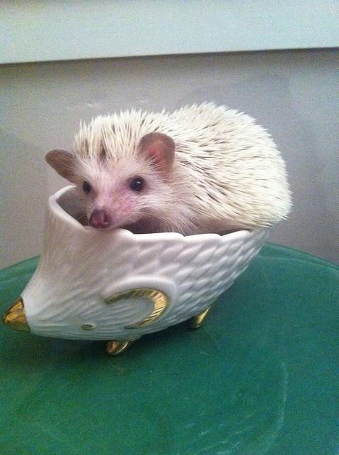 hedgehog funny - 7753686528