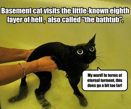 basement cat,bathtub,funny